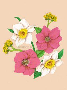 Illustration bouquets de fleurs : narcisses, hellébores, immortelles