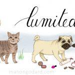 Illustration pour la bannière du blog Lumitea