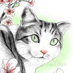 Un chat sous les fleurs de cerisiers