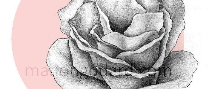Rose au crayon à papier (+ vidéo du dessin)