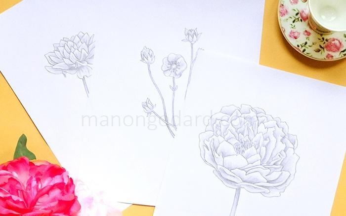 Dessins de fleurs au crayon à papier, par Manon Godard
