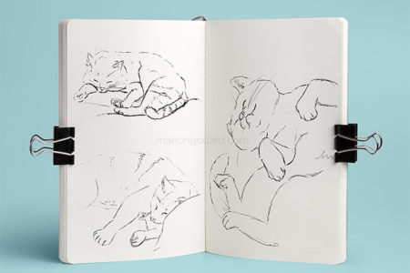 Croquis de chat par Manon Godard
