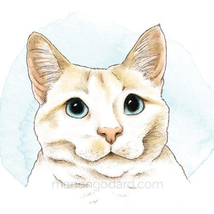 Portrait d'un chat blanc - Dessin au crayon par Manon Godard
